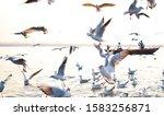 29 11 2019  western gull at... | Shutterstock . vector #1583256871