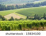 this is Vineyard patterns in the dundee hills oregon. - stock photo