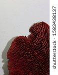 Dried Mushroom Potpourri Cup...