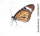 Stock photo monarch butterfly isolated on white background 158358347