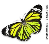 Stock photo yellow butterfly isolated on white background 158358401