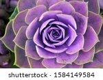 Macro Purple Violet Fresh...