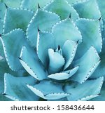 sharp pointed agave plant leaves | Shutterstock . vector #158436644