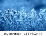 color of year  2020. blooming...   Shutterstock . vector #1584412444