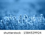 color of year  2020. blooming...   Shutterstock . vector #1584529924