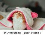 Funny Ginger Kitten In A White...