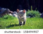 Stock photo little kitten 158494907
