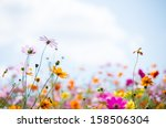 colorful cosmos flower field | Shutterstock . vector #158506304