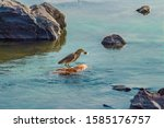 A Picture Of Green Heron In Th...