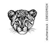 Head Of A Cute Cheetah Baby....