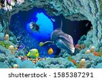View Of A Ocean \'s Animal Unde...