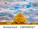 Flying Kites Over A Tree In Th...