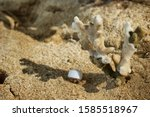 A little hermit crab in a white shell. Hermit crab on a sandy beach next to the coral. Hermit crab resting in the shade of coral.