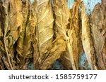 Natural Tobacco Leaf On Cut...