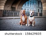 Stock photo  dog in town 158629835