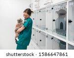 Nurse Holding Pet Cat In...