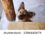 Close Up Of A Stray Dog Hiding...