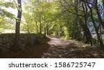 Trail Through Woods In Passier...