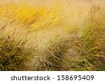 Tall Grass Thickets Background