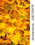 Background Of Autumn Yellow...
