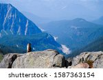 A Hoary Marmot Marmota Caligat...
