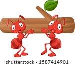 Team Of Ants Carries Log