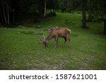 deer stag in autumn forest   Shutterstock . vector #1587621001