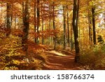 Beech Forest In Red And Orange...