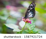 Butterfly At Bohol Island Zoo ...