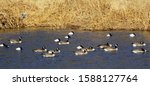 A M Ixed Flock Of Migratory...