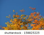 autumn leaves with the blue sky ... | Shutterstock . vector #158825225