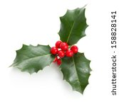 European Holly  Ilex Aquifoliu...