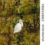 Snowy Egret Standing In Tall...