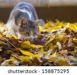 Hunting Cat With A Beautiful...