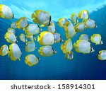 school of colorful tropical... | Shutterstock . vector #158914301
