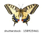 Old World Swallowtail  Papilio...