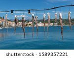 Squid Tentacles Hanging To Dry...