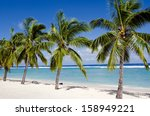 line of coconut palm trees at...
