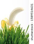 Small photo of Peeled banana behind a tuft of grass