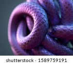 Snake Body Curled Up In A Ball...