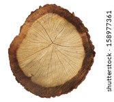 cross section of tree trunk... | Shutterstock . vector #158977361