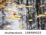 Yellow Maple Leaves Floating O...