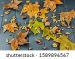 Autumn Leaves With Various...