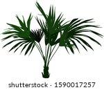 green indoor decorative plant... | Shutterstock .eps vector #1590017257