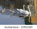 swan family   Shutterstock . vector #15901585