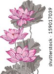 pink lotus on white background | Shutterstock .eps vector #159017039
