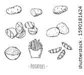 hand drawn set of potatoes. raw ... | Shutterstock .eps vector #1590181624