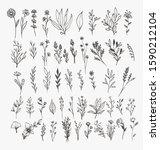 Tiny Plant Clip Art Elegant...
