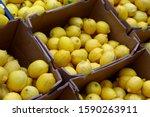 Colorful Display Of Lemons In...