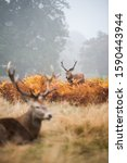 A Vertical Shot Of Two Deer...